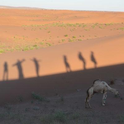 menschen, schatten, sanddüne, kamel, sahara, marokko, flowfly.photo