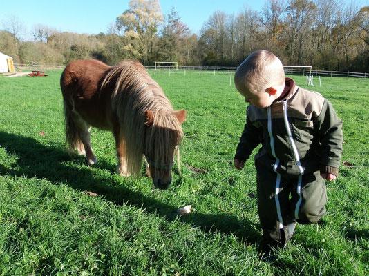 Incas, le poney du Moulin Bertrand 02860 MARTIGNY-COURPIERRE