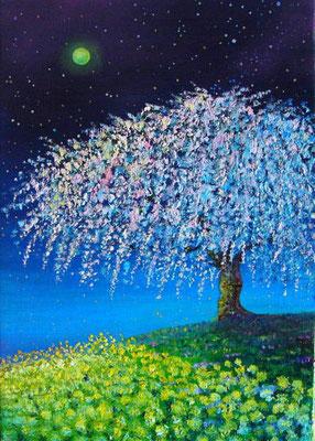 夜桜 SM sold out  静寂な月夜の晩、一本桜のある丘で♪
