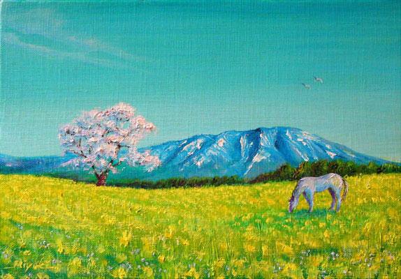 《一本桜のある草原》SM 雪の残る岩手山を背景に、大地にどっしりと根を張る一本桜。 草原で興じる白馬。訪れた小岩井農場にて