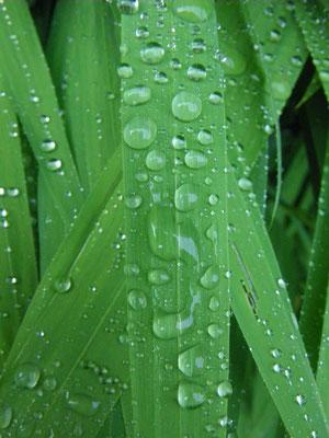 raindrops (II)