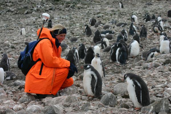 Forschungsaufenthalt in der Antarktis