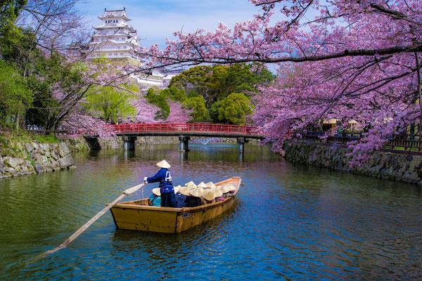 〈s20-101〉ぽせいどんさん:桜の川を行く/2019年4月5日(金)/姫路城