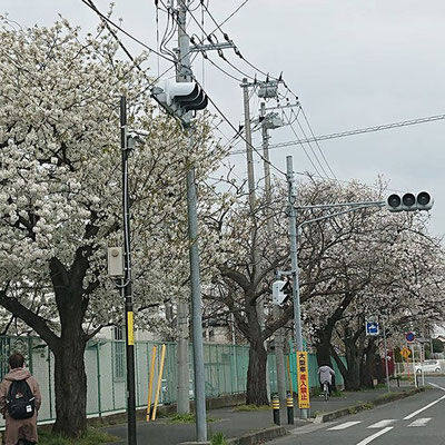 〈s20-047〉risamiharaさん:3月29日(日)/我孫子市