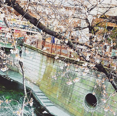 〈s20-024〉to.m.oonさん:目黒川はまだこれからです/3月25日(水)/目黒区・目黒川