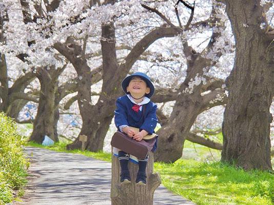 <s20-086>shiho530さん:花咲み(❁´ω`❁)/4月6日(月)/鯖江市