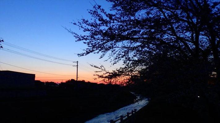 <s20-162>金沢朱莉さん:夜明けと桜/4月2日(木)/福島県相馬市