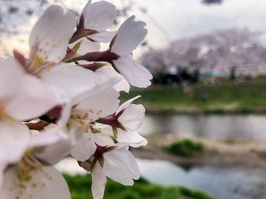 〈s20-034〉JPさん:早く穏やかな日が戻りますように/3月22日(日)/埼玉県朝霞市 黒目川