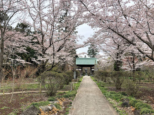 〈s20-058〉nanumotoさん:花道/3月31日(火)/松戸市観音寺