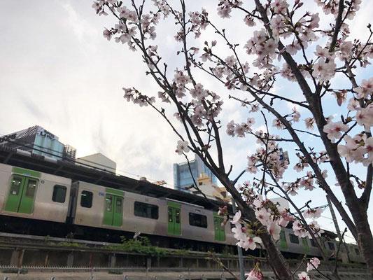 〈s20-019〉mugichocoさん:電車と桜/3月23日(月)/東京都品川区