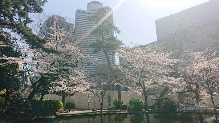 〈s20-032〉Kさん:ポカポカ陽気~/3月26日(木)/清水谷公園