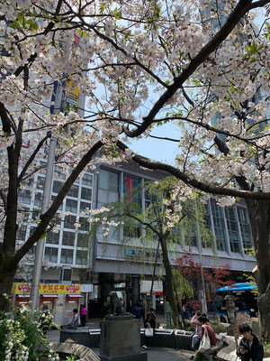 <s20-098>Katsuさん:ハチ公前/4月3日(金)/渋谷駅前