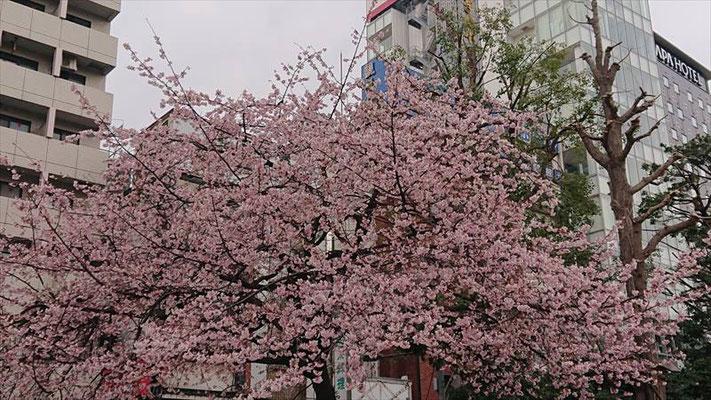 〈s20-010〉脇内孝司さん:時は負けず/2月28日(金)/上野公園