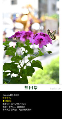 折野さん:神田祭 ,2019年5月12日