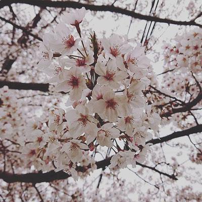 〈s20-046〉risamiharaさん:3月28日(土)/我孫子市
