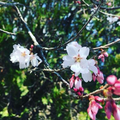 〈s20-020〉中野 真甫さん:春のはじまり/3月18日(水)/和歌山県橋本市