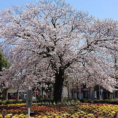 〈s20-049〉risamiharaさん:3月29日(日)/我孫子市