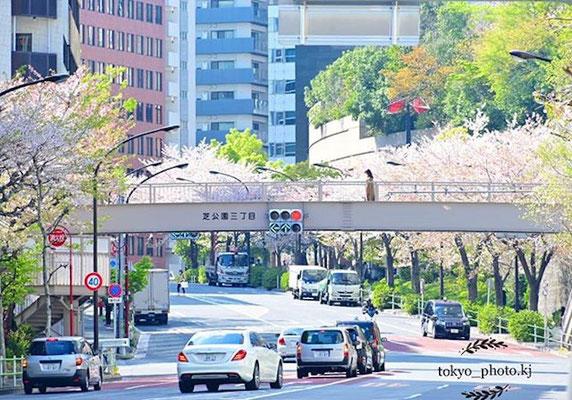 〈s20-113〉tokyo_photo.kjさん:春さんぽ/4月7日(火)/東京都港区