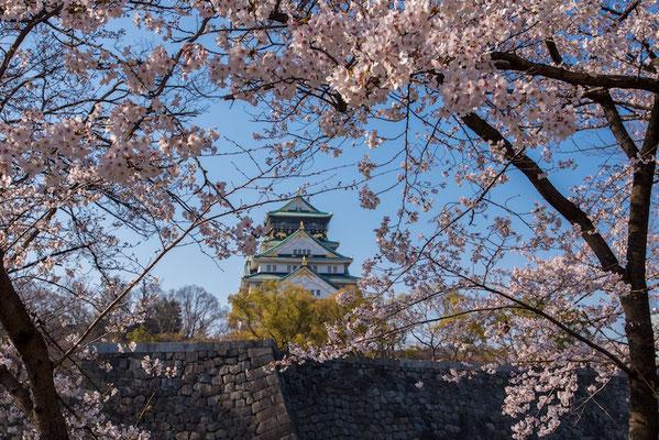 〈s20-108〉ぽせいどんさん:大阪、春の陣/2019年4月4日(木)/大阪城