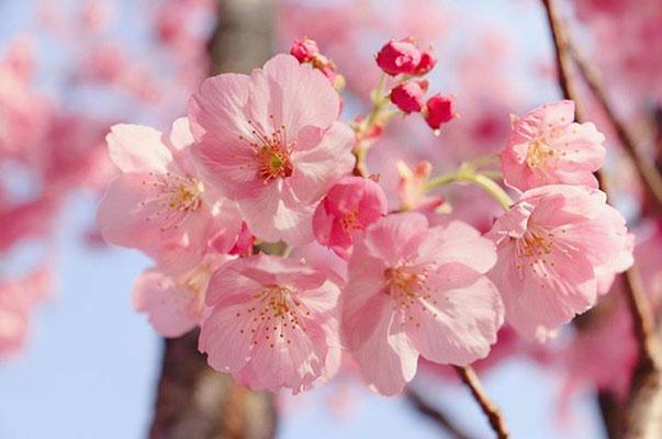 〈s20-036〉tabi2018nohohonさん:国営昭和記念公園にて。/3月21日(土)/東京都立川市