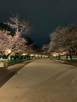 〈s20-051〉トッキーさん:閑散とした上野公園/3月27日(金)/上野公園
