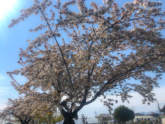〈s20-126〉tuanさん:4月9日(木)/群馬県前橋市