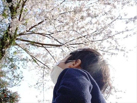 <s20-172>green_peas_さん:また来年/4月8日(水)/神奈川県 深見神社