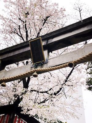 <s20-074>アジフライさん:神社の桜/3月31日(火)/世田谷区