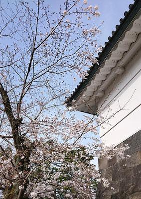 〈s20-014〉たけさん:桜田門は三分咲?/3月22日(日)/桜田門