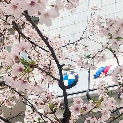〈s20-053〉TeeeSさん:がんばろう!/3月30日(月)/東京都港区・外苑前