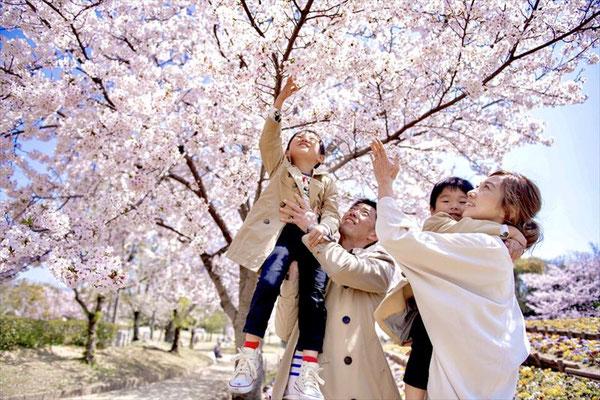 <s20-181>なこさん:桜満開/4月4日/姫路城
