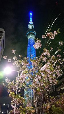 〈s20-168〉たけさん:これは、何桜?/4月24日(金)/スカイツリー