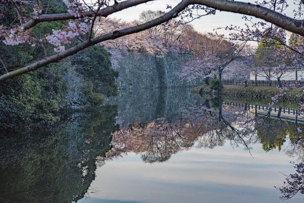 〈s20-102〉ぽせいどんさん:Reflection SAKURA/2019年4月5日(金)/姫路城