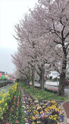 <s20-078>saiさん:自粛でも希望/3月31日(火)/横浜市