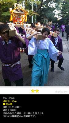 ばねつーさん:若木祭, 2016年11月4日, 渋谷区, 渋谷の金王八幡宮、氷川神社と宮入りし ついには権禰宜さん迄素敵です。