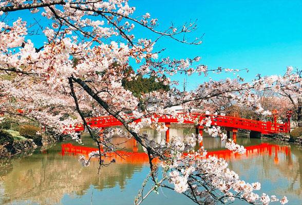 <s20-161>金沢朱莉さん:桜と橋/4月3日(金)/福島県相馬市