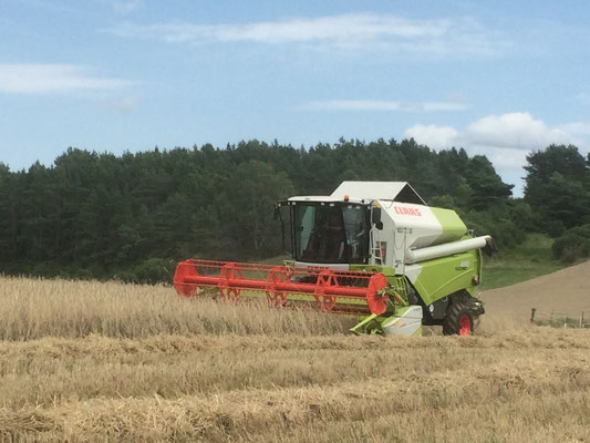 Getreide-Ernte auf Gut Fahrenbach. Quelle: Gut Fahrenbach