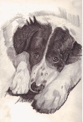 Angus, Kohle im Skizzenbuch