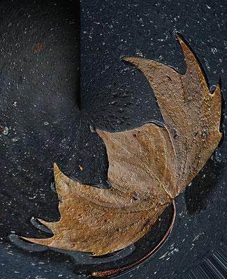 Herbstblatt auf Asphalt