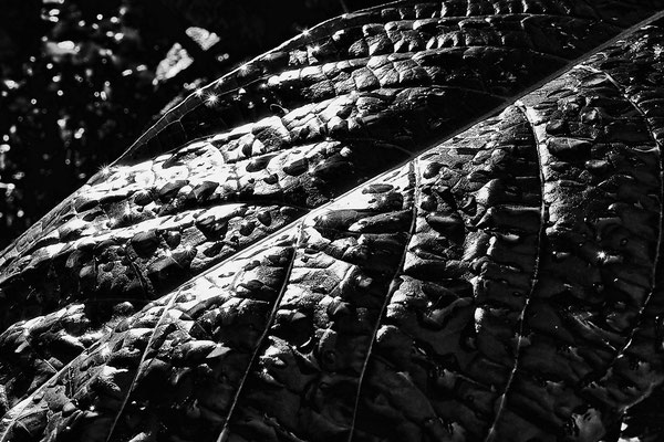 """""""Alienskin"""" eines Herbstblattes"""