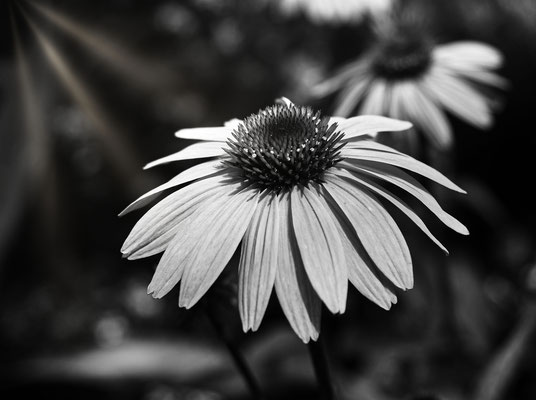 Black and White Makro
