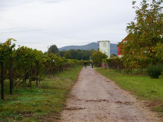 Zwischen den Weinfeldern hinterm Womo