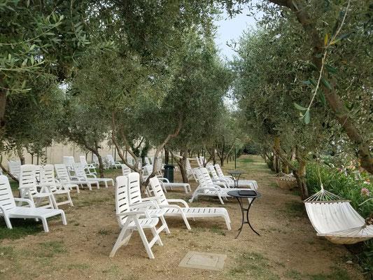 Liegestühle unter Olivenbäumen