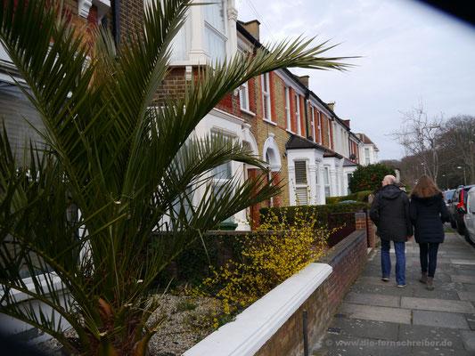 Auch Palmen wachsen hier draußen!