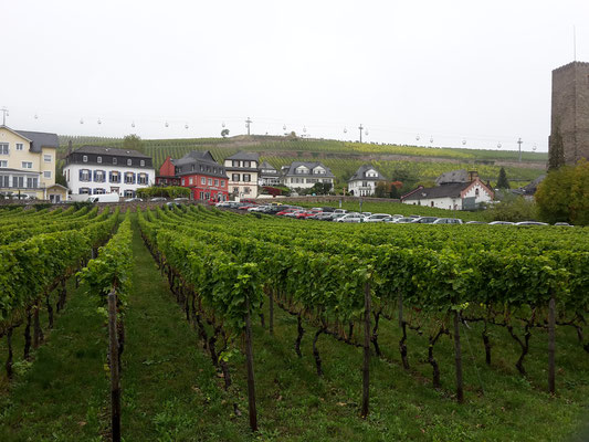 Weingüter zwischen Autos und Straßen