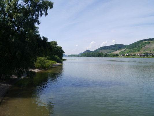 Am Ufer des Naturschutzgebietes Namedyer Werth