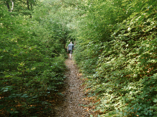 Waldpfad bergauf zurück zum Stellplatz