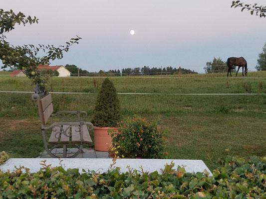 Abendstimmung auf dem Platz mit Pferd und Mond