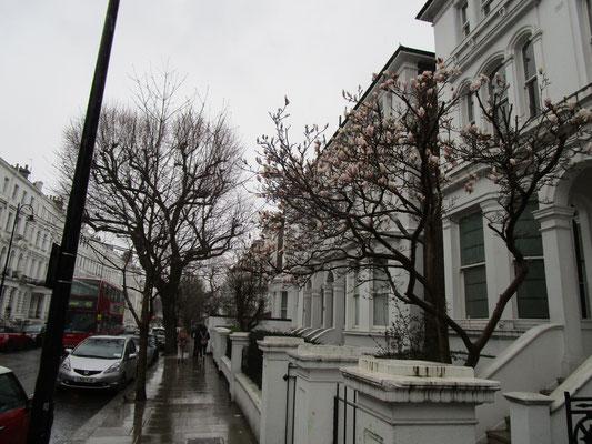 ... mit beginnender Baumblüte im Regen...