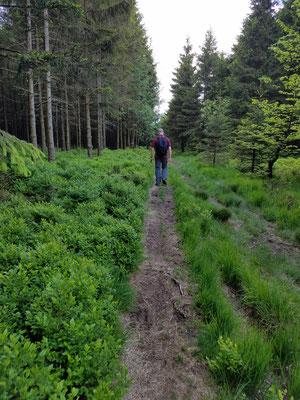 schmale Wanderwege
